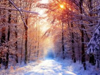 обои Лучи солнца зимoй над дорогой фото