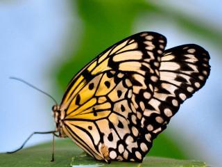 обои Узоры на крыльях бабочки фото