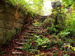 обои Лестница в листьях фото