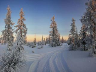 обои Заколдован невидимкой,   дремлет лес под сказку сна фото