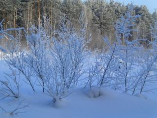 обои Зима в Сосновом Бору фото