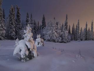обои Зимний северный вечер фото