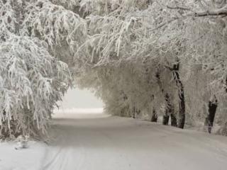 обои Красота зимы фото