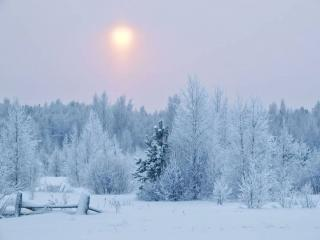 обои Туманное зимнее солнце фото
