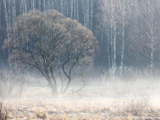 обои Утро встречает туманом фото
