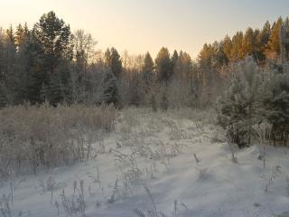 обои Зимняя прогулка фото