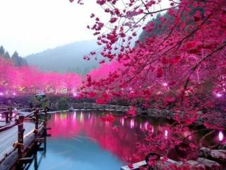 обои Розовый сад у озера фото