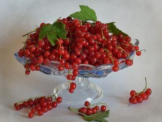 обои Натюрморт - Красная смородина фото
