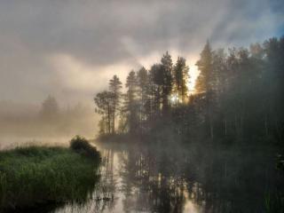 обои Летний утренний туман фото