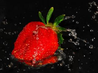 обои Красная ягода в каплях фото