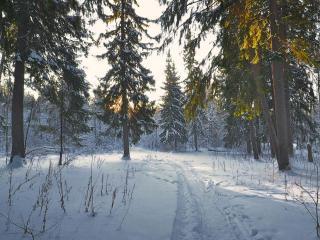 обои Утро в зимнем лесу фото