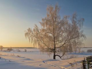 обои Симфония жизни и света у зимнего дерева фото