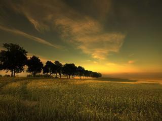 обои Поля пшеницы фото