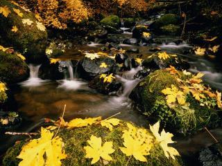 обои Осенний ручей, опавшие желтые листья фото
