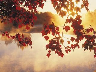 обои Восход сквозь осенние листья фото