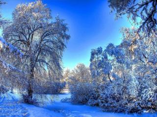 обои Голубой зимний день фото