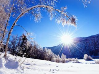 обои Зимний солнечный день фото