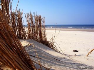 обои Сухая трава на пляже фото