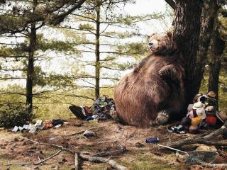 обои Сытый медведь - довольный медведь фото