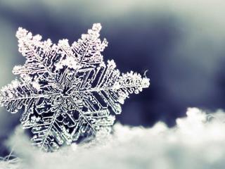 обои Красивая снежинка фото