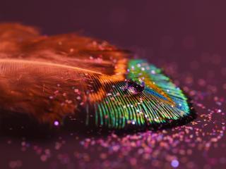 обои Маленькая капелька на разноцветном перышке фото