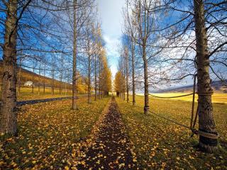 обои Осенняя аллея фото