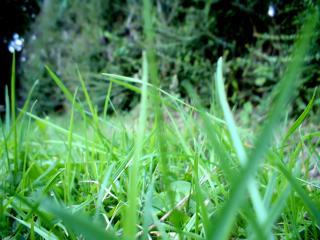 обои Трава на поляне крупным планом фото