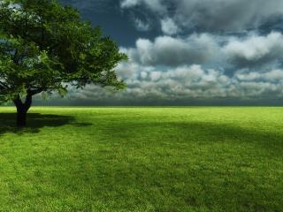 обои Раскидистое дерево в поле фото