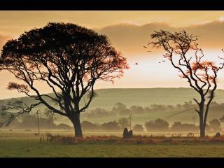 обои Туман в деревенской местности фото