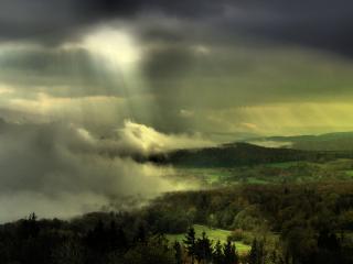 обои Туман надвигается на лес фото