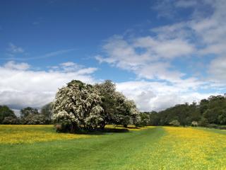 обои Желтая поляна фото