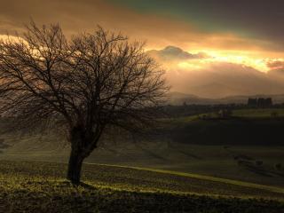 обои Одинокое дерево в долине фото