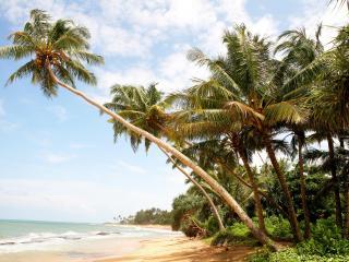 обои Пальмы на берегу острова фото