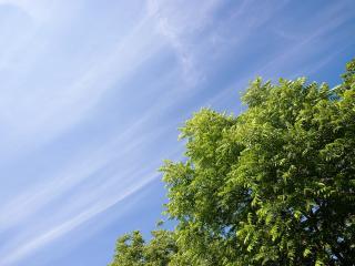 обои Дерево под небом фото