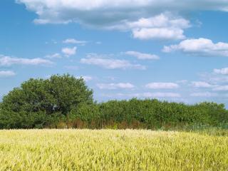 обои Кусты на границе поля фото
