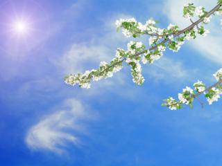 обои Ветка яблони на фоне неба фото