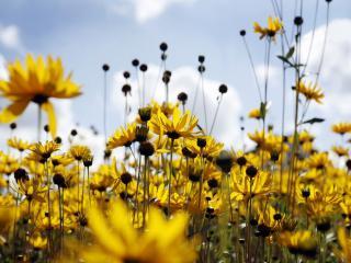 обои Желтое великолепие цветов фото