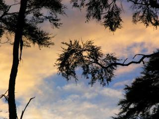 обои Силуэты веток на фоне неба фото