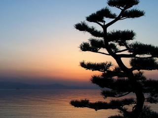 обои Силуэт извилистого дерева на фоне неба фото