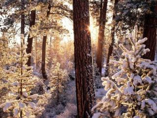 обои Зимний день в лесу фото