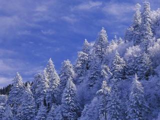 обои Зимний пейзаж фото