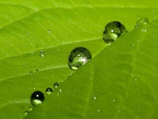 обои Несколько капель воды на листе фото