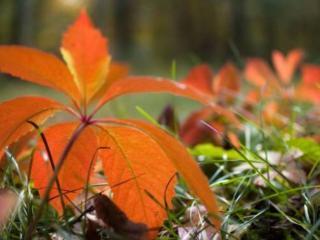 обои Осенний росток фото