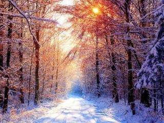 обои Солнечный день в зимнем лесу фото