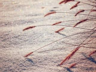 обои Трава на снегу фото