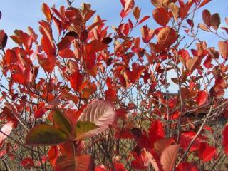 обои Багряных листьев мозаика фото