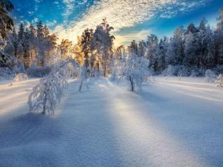 обои Белый пух зимы фото