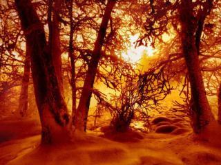 обои Красная зима фото