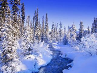 обои Прелесть зимы фото