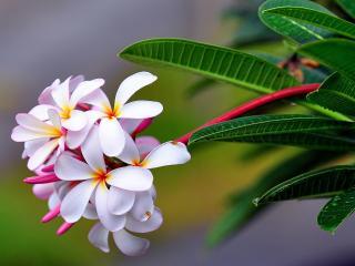 обои для рабочего стола: красивый пагoн цветка